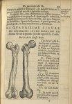 La quatriesme Figure des extremitez inferieures est du second os de la grande jambe appellé la cuiss [...]