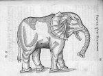 Elephant - Discours d'Ambroise Paré, conseiller premier chirurgien du roy, à scavoir , de la mumie,  [...]