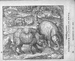 Combat du Rhinoceros contre l'Elephant - Discours d'Ambroise Paré, conseiller premier chirurgien du  [...]