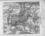 Pirassoipi, espece de Licorne d'Arabie - Discours d'Ambroise Paré, conseiller premier chirurgien du  [...]