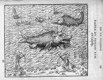 Poisson nommé Caspilly - Discours d'Ambroise Paré, conseiller premier chirurgien du roy, à scavoir , [...]