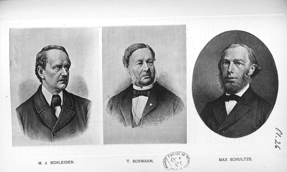 Planche 26. M.J. Schleiden / T. Schwann / Max Schultze - Some apostles of physiology -  - med08985x0154