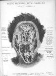 Planche 14. Coupe frontale rétro-orbitaire. Segment postérieur - Atlas d'anatomie topographique. Vol [...]