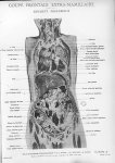 Planche 18. Coupe frontale extra-mamillaire. Segment postérieur - Atlas d'anatomie topographique. Vo [...]