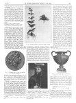 Fig. 1. Pied fleuri d'Eupatoire d'Avicenne récolté en juillet / Fig. 2. Mithridate Eupator, d'après  [...]
