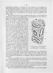 Fig. 24. Cancer de l'estomac - Titres et travaux scientifiques