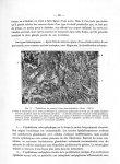 Fig. 11. Épithélioma du poumon à type para-malpighien. (Gross. : 100/1) - Titres et travaux scientif [...]