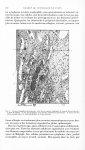 Fig. 1. Ilot para-malpighien pluritrabéculé, situé dans le segment céphalique du corps de la pars tu [...]