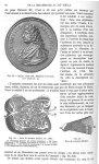 Fig. 28. Bellini, 1643-1701 / Fig. 29. Rein de mouton / Fig. 30. Rein de mouton -  Encyclopédie fran [...]