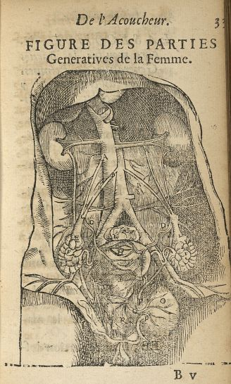 Figure des parties generatives de la femme - L'accoucheur methodique, qui enseigne la maniere d'oper [...] - Anatomie. Organes génito-urinaires. France. 17e siècle - med34760x0063