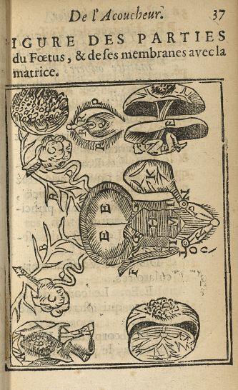 Figure des parties du foetus, & de ses membranes avec la matrice - L'accoucheur methodique, qui ense [...] - Anatomie. Obstétrique. Gynécologie. France. 17e siècle - med34760x0067