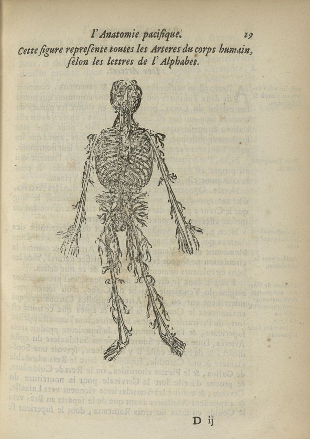 Cette figure represente toutes les arteres du corps humain - L'Oeconomie chirurgicale, pour le resta [...] - Anatomie. Sang (vaisseaux). 17e siècle - med5207Ax0175