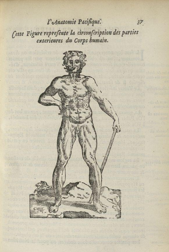 Cette figure represente la circonscription des parties exterieures du corps humain - L'Oeconomie chi [...] - Anatomie. 17e siècle - med5207Ax0225