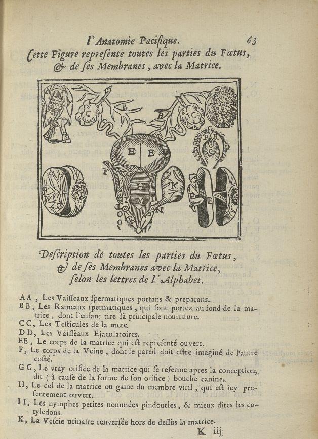 Cette figure represente toutes les parties du foetus, & de ses membranes avec la matrice - L'Oeconom [...] - Anatomie. Obstétrique. Grossesse. 17e siècle - med5207Ax0251