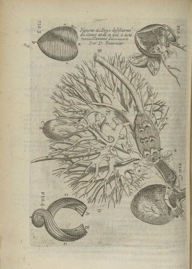 Fig. 1 à Fig. 4. Figure du foye déscharné, du coeur et de ce qui a esté nouvellement descouvert par  [...] - Anatomie. Foie. Coeur. 17e siècle - med5207Ax0256