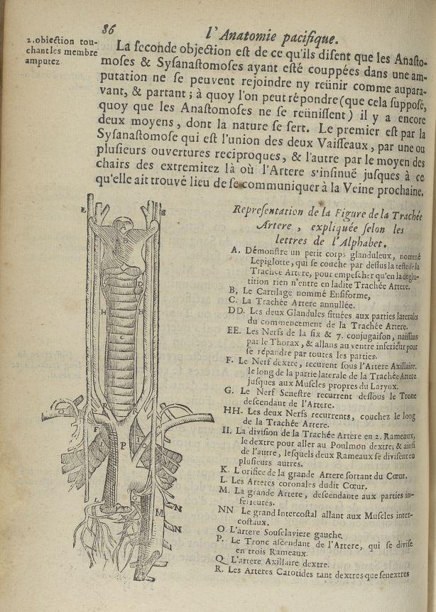 Representation de la Figure de la trachée artere - L'Oeconomie chirurgicale, pour le restablissement [...] - Anatomie. Sang (vaisseaux). 17e siècle - med5207Ax0278