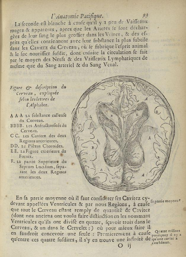 Figure & description du cerveau - L'Oeconomie chirurgicale, pour le restablissement des parties moll [...] - Anatomie. Cerveau. 17e siècle - med5207Ax0285