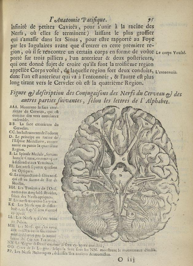 Figure & description des conjugaisons du cerveau & des autres parties suivantes - L'Oeconomie chirur [...] - Anatomie. Cerveau. 17e siècle - med5207Ax0287