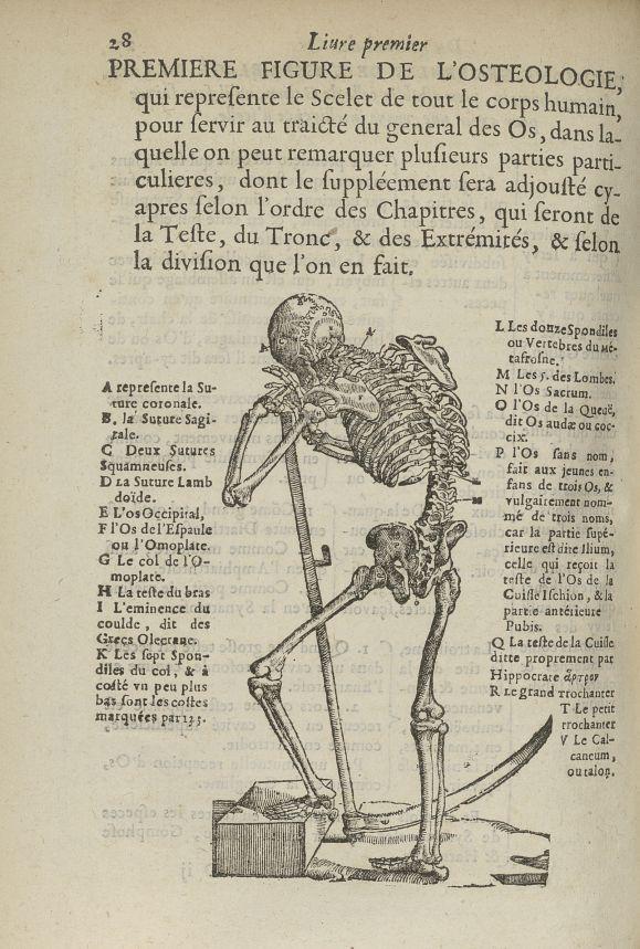 Premiere Figure de l'Osteologie, qui represente le scelet de tout le corps humain - L'Oeconomie chir [...] - Anatomie. Squelette (os). 17e siècle - med5207Ax0408