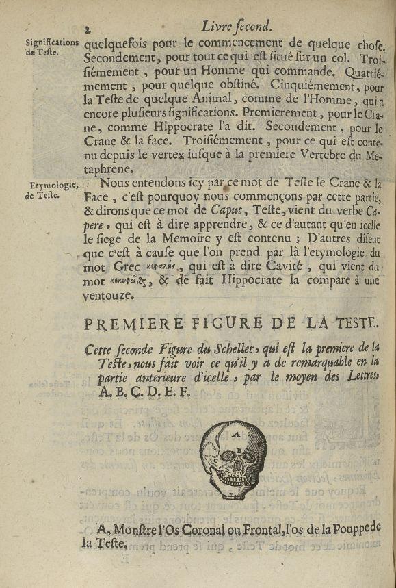Seconde Figure du schellet, qui est la premiere de la teste - L'Oeconomie chirurgicale, pour le rest [...] - Anatomie. Squelette (os). Crânes. 17e siècle - med5207Ax0410