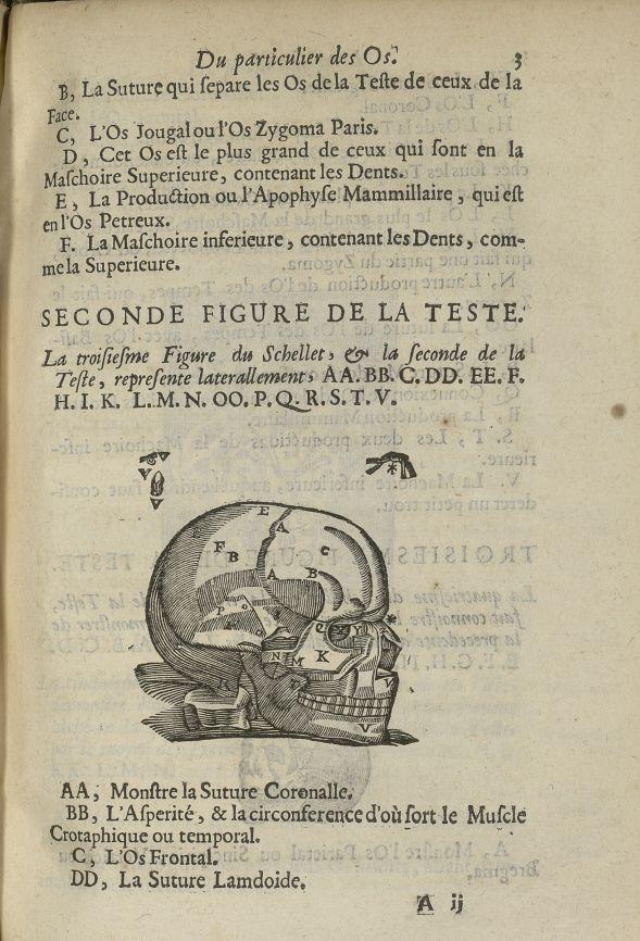 La troisiesme Figure du schellet, & la seconde de la teste - L'Oeconomie chirurgicale, pour le resta [...] - Anatomie. Squelette (os). Crânes. 17e siècle - med5207Ax0411