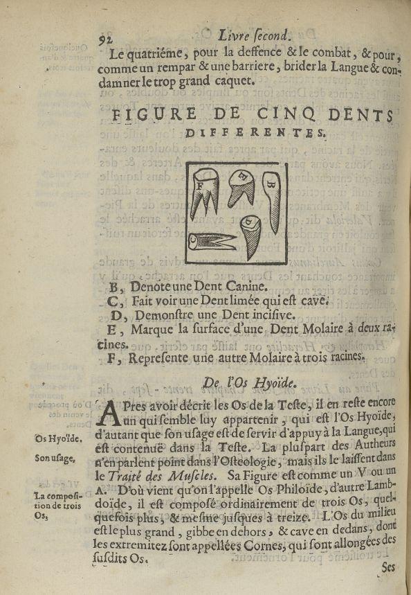 Figure de cinq dents differentes - L'Oeconomie chirurgicale, pour le restablissement des parties mol [...] - Anatomie. Odontologie. 17e siècle - med5207Ax0458