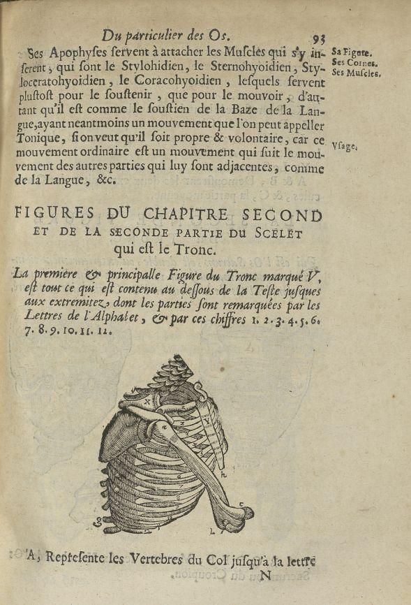 La premiere & principalle Figure du tronc - L'Oeconomie chirurgicale, pour le restablissement des pa [...] - Anatomie. Squelette (os). Thorax. 17e siècle - med5207Ax0459