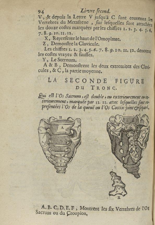 La seconde Figure du tronc qui est l'os sacrum - L'Oeconomie chirurgicale, pour le restablissement d [...] - Anatomie. Squelette (os). Colonne vertébrale. 17e siècle - med5207Ax0460