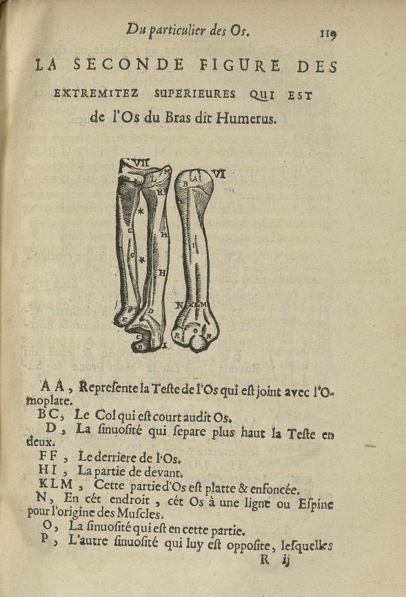 La seconde Figure des extremitez superieures qui est de l'os du bras dit humerus - L'Oeconomie chiru [...] - Anatomie. Squelette (os). Membres supérieurs. 17e siècle - med5207Ax0485