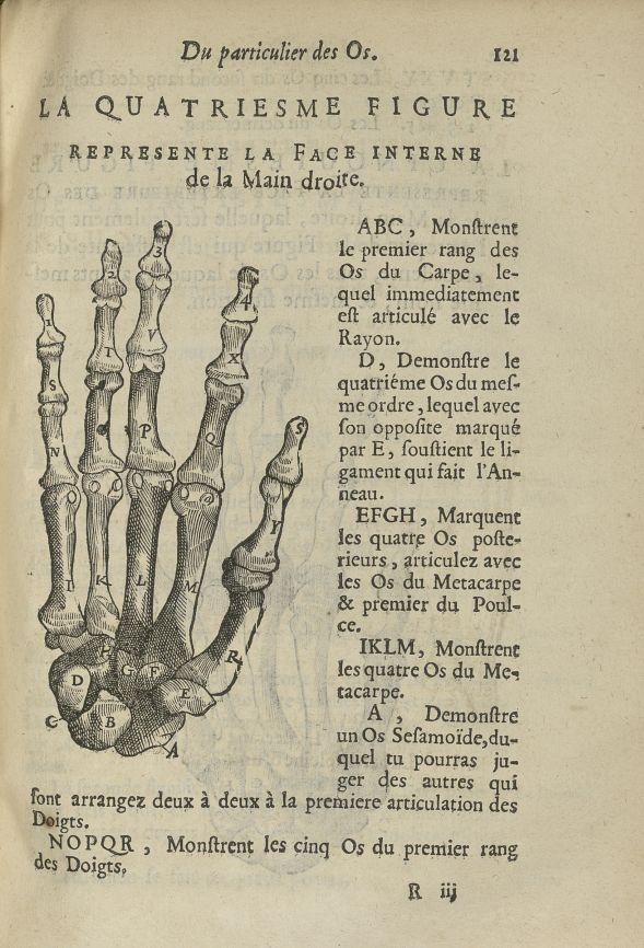 La quatriesme Figure represente la face interne de la main droite - L'Oeconomie chirurgicale, pour l [...] - Anatomie. Squelette (os). Membres supérieurs. 17e siècle - med5207Ax0487