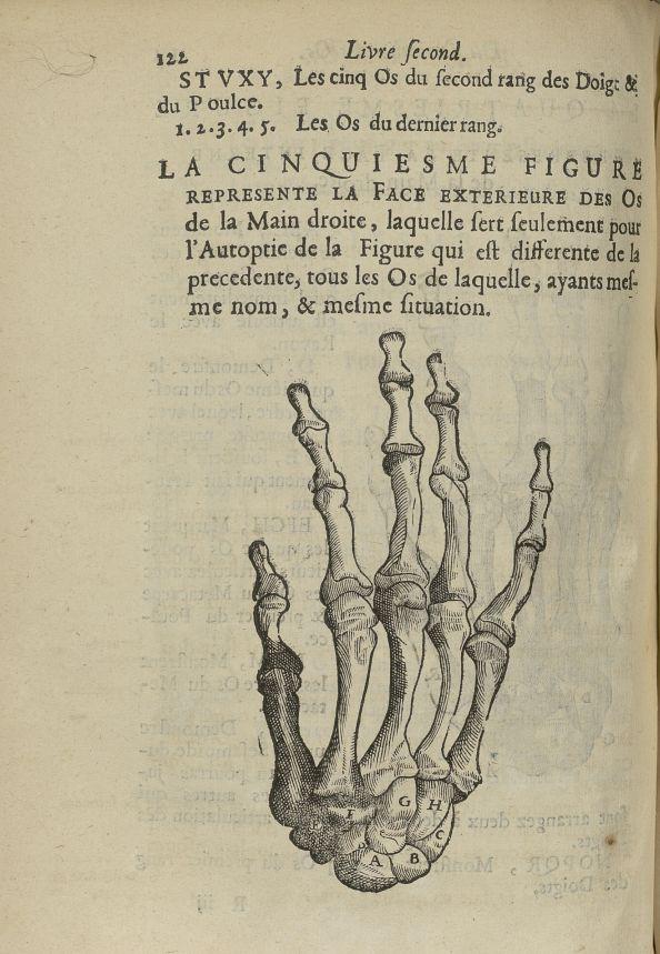 La cinquiesme Figure represente la face exterieure des os de la main droite - L'Oeconomie chirurgica [...] - Anatomie. Squelette (os). Membres supérieurs. 17e siècle - med5207Ax0488