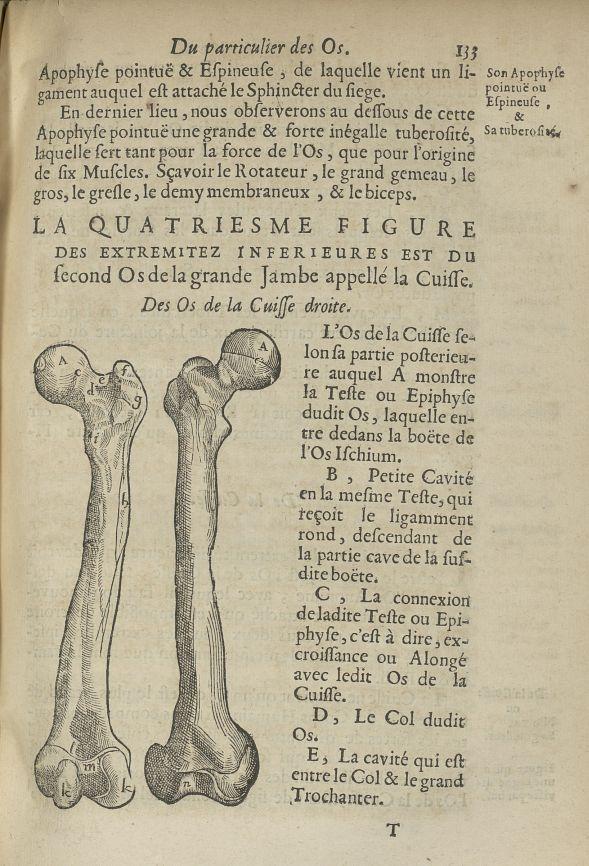 Des os de la cuisse droite - L'Oeconomie chirurgicale, pour le restablissement des parties molles du [...] - Anatomie. Squelette (os). Membres inférieurs. 17e siècle - med5207Ax0501