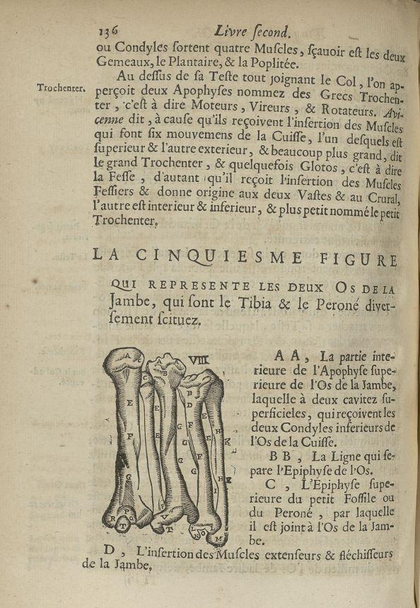 La cinquiesme Figure qui represente les deux os de la jambe, qui sont le tibia & le peroné diversement situez - Anatomie. Squelette (os). Membres inférieurs. 17e siècle - med5207Ax0504