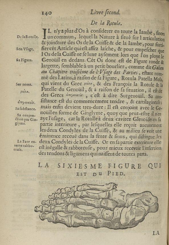 La sixiesme Figure qui est du pied - L'Oeconomie chirurgicale, pour le restablissement des parties m [...] - Anatomie. Squelette (os). Membres inférieurs. 17e siècle - med5207Ax0508
