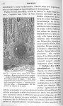 Fig. 69. Portion d'une coupe de la région peptique. 6 Régions profondes de la muqueuse. Gastrite int [...]