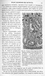 Fig. 70. Portion d'une coupe de la région peptique pratiquée perpendiculairement à la surface. Parti [...]