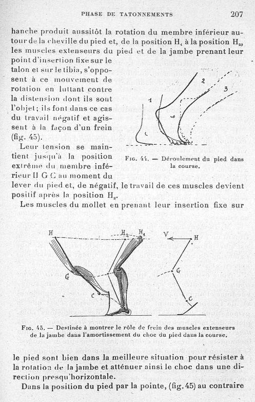 Fig. 44. Déroulement du pied dans la course/ Fig. 45. Destinée à montrer le rôle de frein des muscle [...] -  - med65254x0207