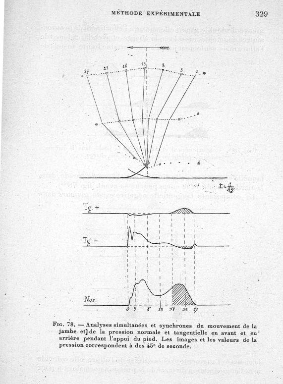 Fig. 78. Analyses simultanées et synchrones du mouvement de la jambe et de la pression normale et ta [...] -  - med65254x0329