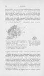 Fig. Coupe traitée par L'orcéine de Grübler, méthode de Taënzer modifiée, pour déceler la présence d [...]