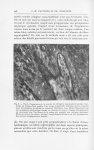 Fig. 6. — Vue à l'immersion de la couche de collagène argentophile bordant l'épiderme au niveau d'un [...]