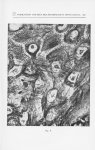 Fig. 8. — Appareil filamenteux des cellules malpighiennes (Peau du visage dans un cas de kératose sé [...]