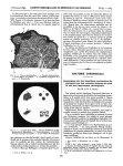 Botryomycose humaine / Fig. 4. I. Tissu en désintégration. 2. Vaisseaux embryonnaires. 3. Tissu fibr [...]