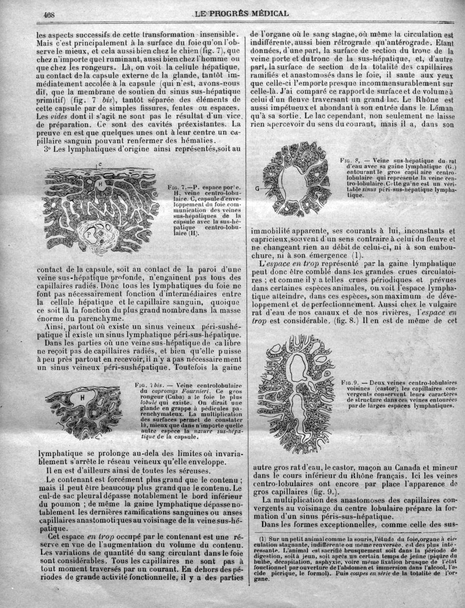 Fig. 7. - P. espace porte H. veine centro-lobulaire. C, capsule d'enveloppement du foie communicatio [...] -  - med90170x1909x01x0472