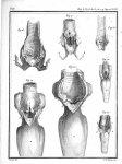 Fig. 16. Larynx du chien / Fig. 17. Larynx du chat / Fig. 18. Larynx du lapin / Fig. 19 et 20. Laryn [...]