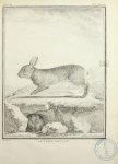 Le lapin sauvage - Histoire naturelle, générale et particulière, avec la description du Cabinet du R [...] - Animaux, animal. Zoologie - medpharma_006262x06x0454