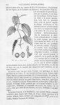 Poivre noir - Histoire naturelle des drogues simples, ou Cours d'histoire naturelle professé à l'Éco [...]