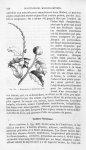 Mancenillier à feuilles de houx - Histoire naturelle des drogues simples, ou Cours d'histoire nature [...]