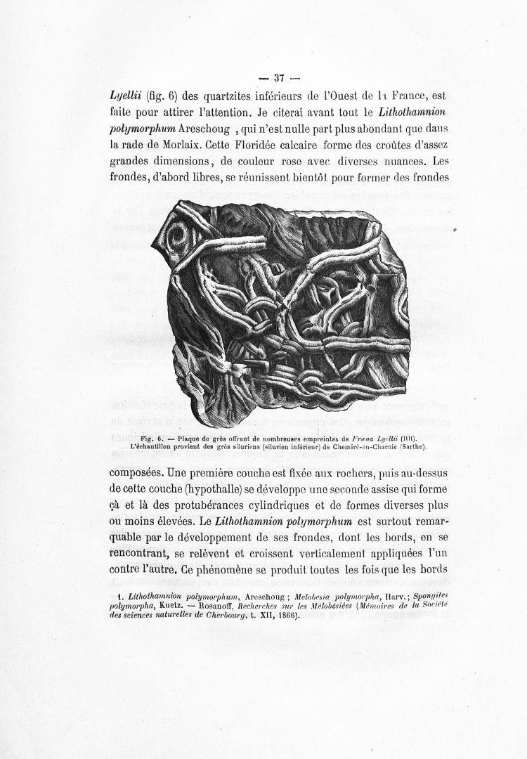 histoire de la pharmacie pdf