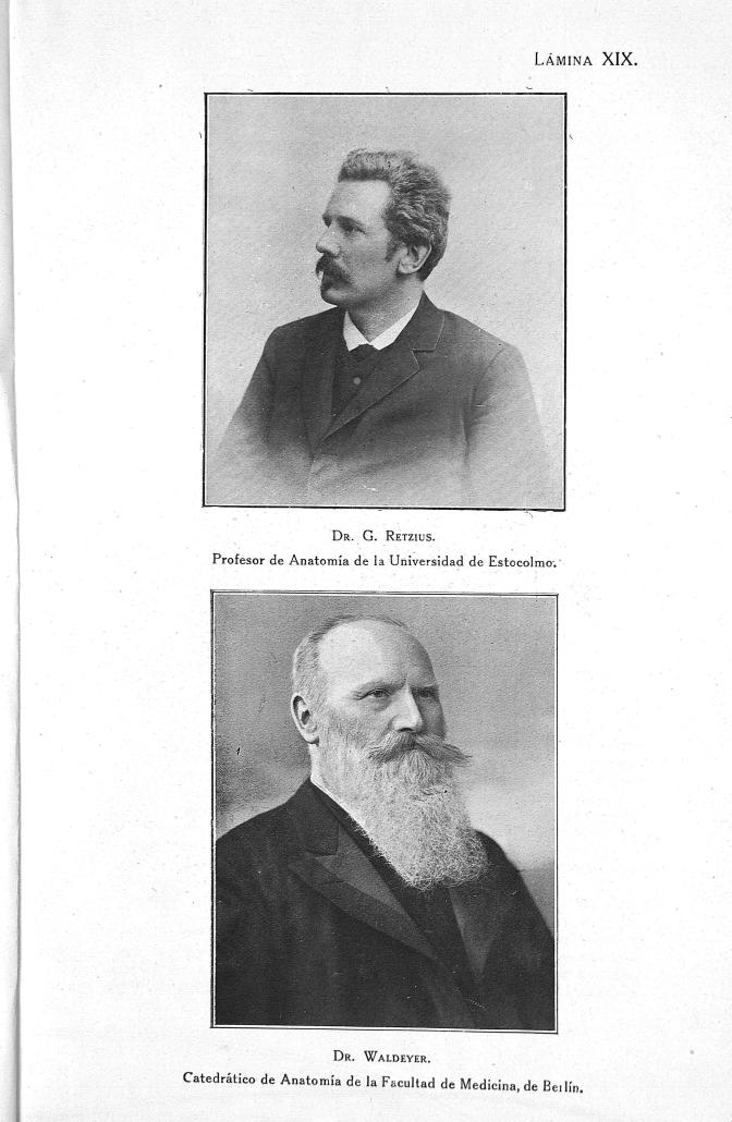 Dr. G. Retzius. Profesor de anatomía de la universidad de Estocolmo/ Dr. Waldeyer. Catedrático de anatomía de la facultad de medicina, de Berlin -  - medryc002x0223