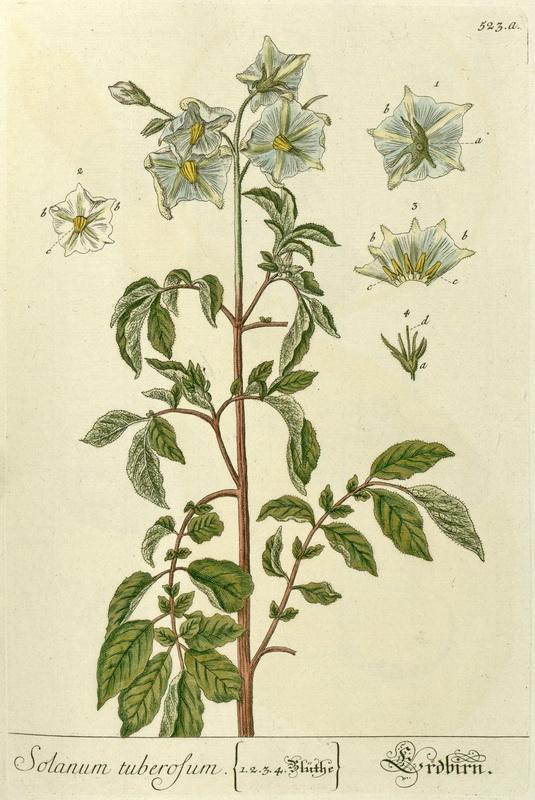 Exposition virtuelle antoine augustin parmentier 1737 1813 biu sant paris - Pomme de terre germee comestible ...